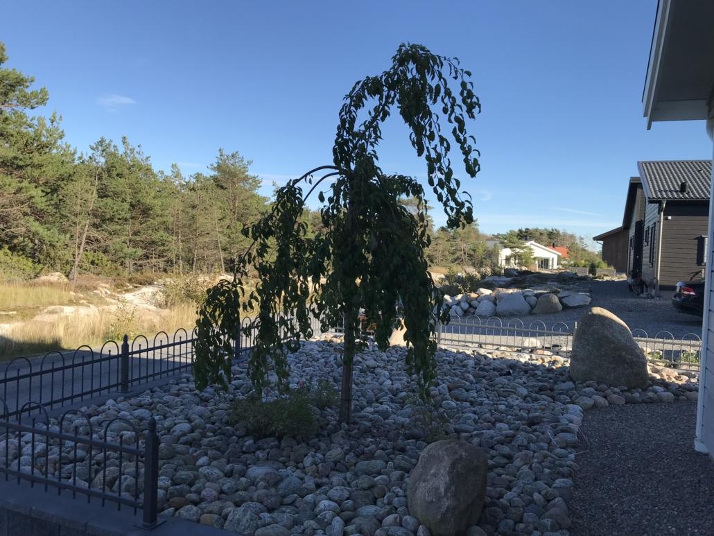 Falk´s trädgårdsmiljö i Tanumshede